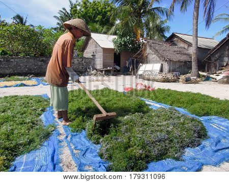 Woman Working At An Algae Field In Nusa Lembongan