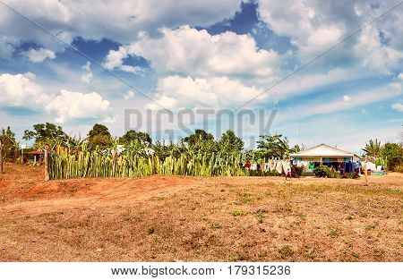 Picturesque Landscape Valley Vinales  Village  Pinar Del Rio Cuba Latin America Mountains  Field Clo