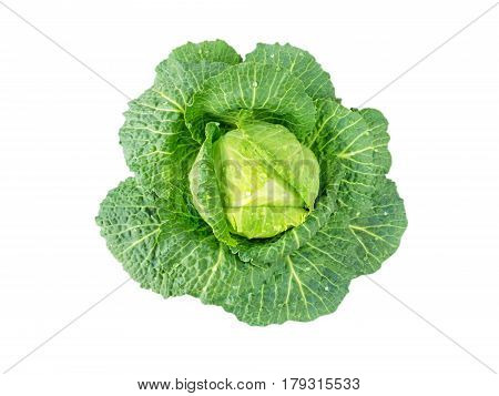 Cabbage head with water drops isolated on white