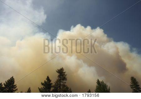 Angora Fire 5