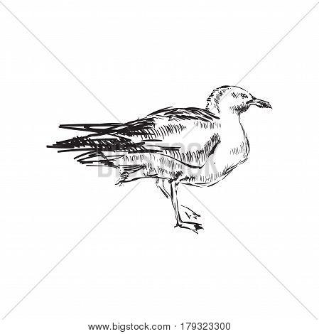 Seagulls Hand Drawing Vector illustration Seagulls Hand Drawing Vector illustration