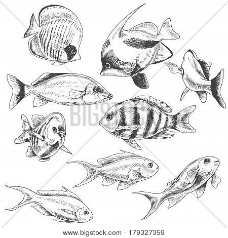 Hand drawn underwater natural elements. Sketch of reef animals. Monochrome fishes set. Black and white illustration coloring page.