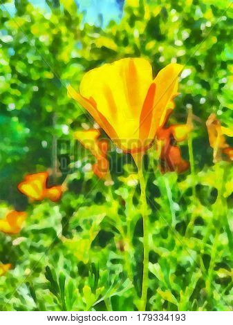 Digital watercolor painting of California poppies in the garden.