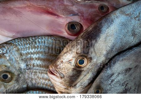 Exotic Tropical Marine Fish For Sale, Fresh Sea Catch: Pink Deep-sea Fish, Gray And Green Fish On Th