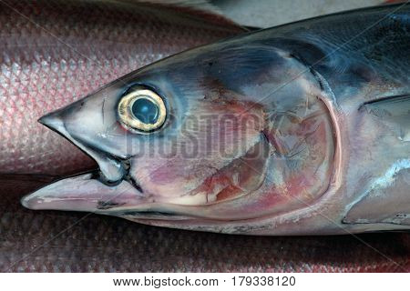 Large Tuna Fish As Drawn, Graphically: Gray Back At The Fish, Pink Fins, Open Mouth And A Big Yellow