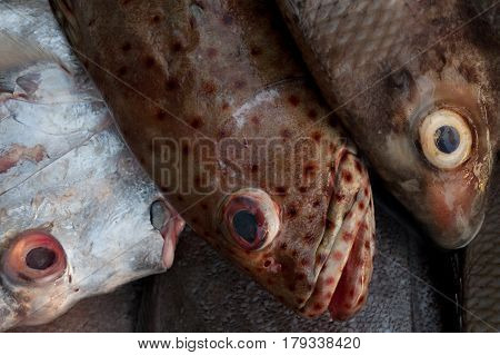 Left White Fish With Pink Eyes And Mouth, The Right Two Brown Fish In Red And Yellow Stain Eye With