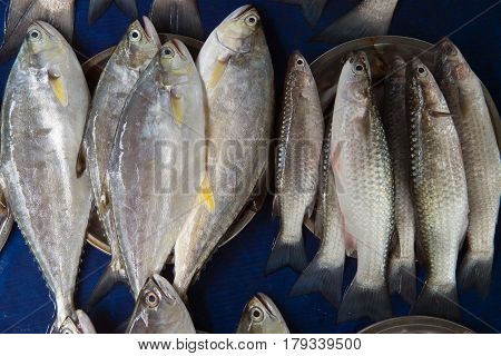A Lot Of Fresh Saltwater Fish Gray Color And Different Size And Type For Sale On A Blue Background.