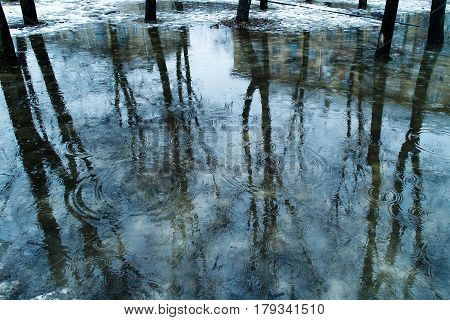 Puddle: Blue Water, Which Reflects The Black Trunks Of Trees With Bare Branch Remnants Snow Ripples