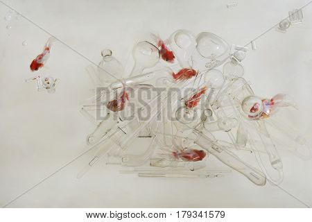 Goldfish Swim In The Transparent Water Of Aquarium Amidst A Multitude Of Transparent Glass Dishes: A