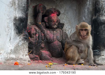 A Small Monkey Sits In A Niche Of A White Wall Near The Black Stone Sculpture Of The Monkey God, The