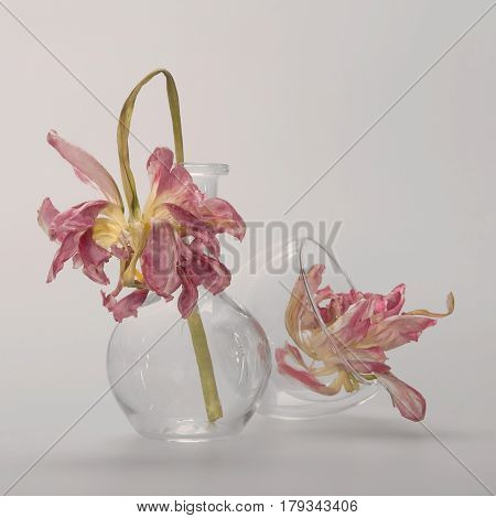 A Pink Peony On A Long Stem In A Round Glass Flask, Followed By An Inverted Transparent Cup With A S