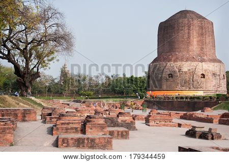 Huge brown stupa Sarnath the ruins of stones of brick color the site of the first Buddhist Teachings of the Buddha Shakyamuni near Varanasi India.