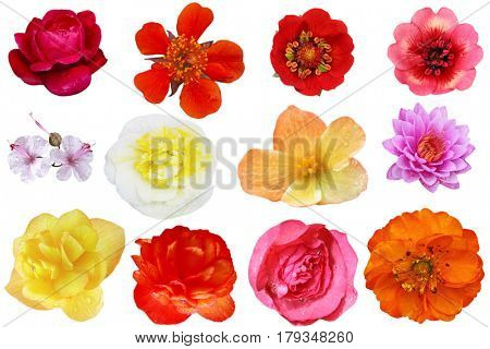 Flower heads collage isolated on white background