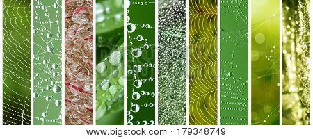 Spider web and grass with dew drops spring summer or ecology concept
