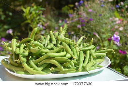 Green beans casserole also known as string beans or snap beans textured background. Fresh Green Bean Recipes.