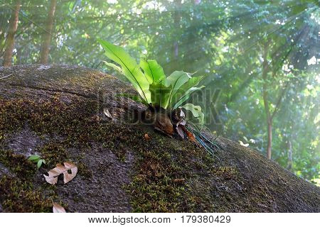 Small tree in the jungle, Photosynthesis, Abundance of the waterfall