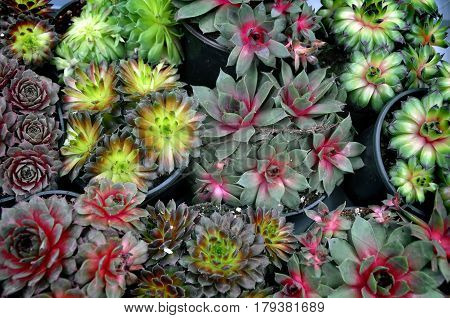 Many small round pots with different succulent plants.