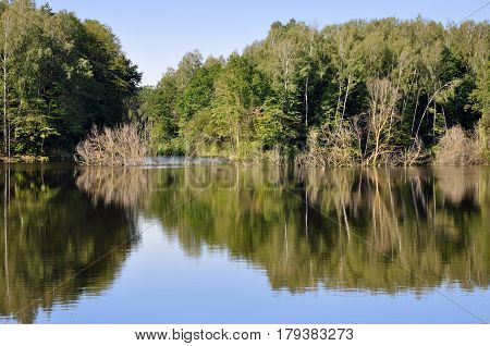 Flooded beach with dry pine forest and green grass reflected in the river. The river Neman Belarus.