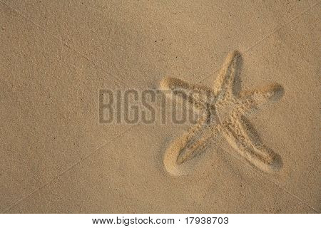 Starfish footprint over caribbean sand, vacation concept