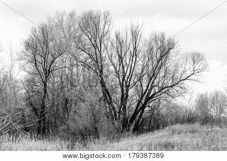 Melancholic Tree In Winter