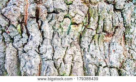 The picture shows a close-up of bark of the tree structure. On the bark of a tree to see the moss