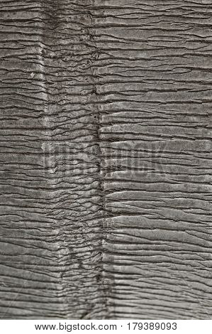 Palm tree texture. Background of palm tree bark. Organic background and texture. Abstract texture and background for designers. Macro view of palm tree bark. Natural pattern.