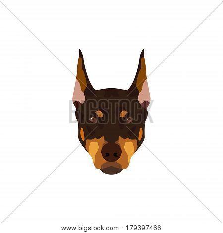 Doberman Pinscher dog. Vector illustration portrait of brown dog on white background.