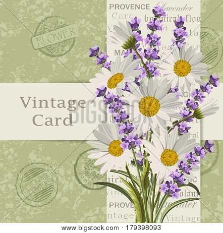 Beautiful lavender flowers and daisies for invitation card. Vintage postcard background. Vector illustration.