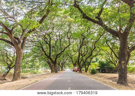 The tunnel of trees in Ayutthaya Historical Park Ayutthaya Thailand.