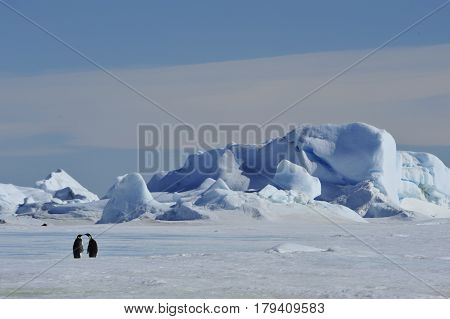 Beautiful view of icebergsand Emperor Penguiuns in Snow Hill Antarctica, global warming and climate change concept