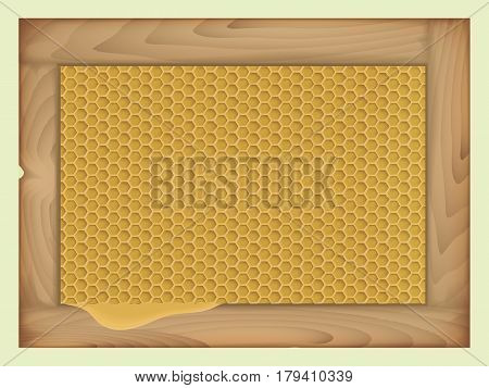 vector honey in the comb. in rectangular wooden frame. flowing honey. isolated object
