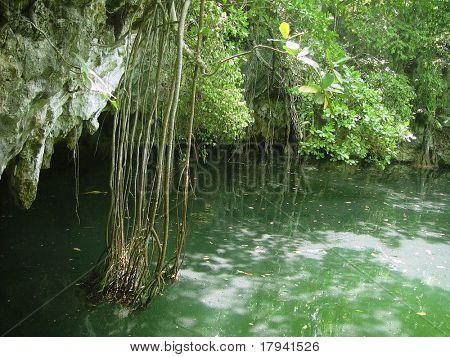 cenote lake in Riviera Maya jungle mayan Quintana Roo