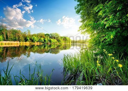 Trees by calm river in the morning