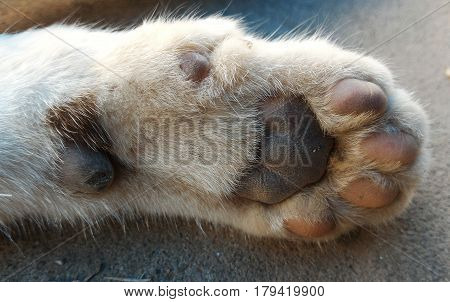 detail of underfoot of dirty cat foot