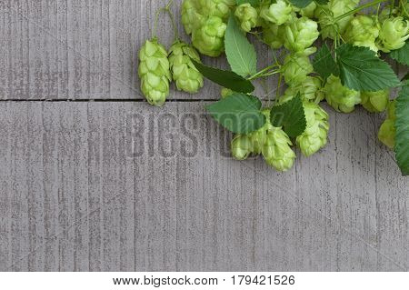 green ripe hop cones. Beer production ingredient. View from above . Ingredients for the preparation of organic beer. Brewing.