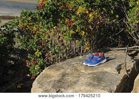 Dartmouth Massachusetts USA - August 30 2014: Sandy sneakers left on shoreline rock near rose hips on Rosa rugosa bushes
