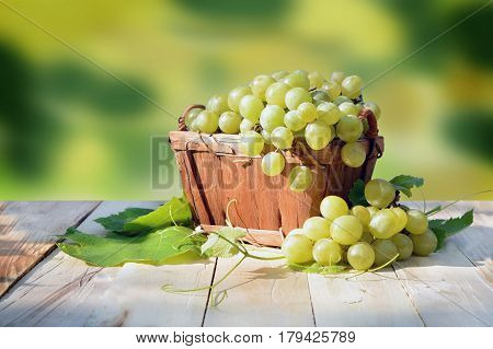Bunches of fresh grapes in a wooden basket. Leaves and shoots on a wooden background. A bright warm day in nature. Viticulture. Ripe yellow sweet grapes.