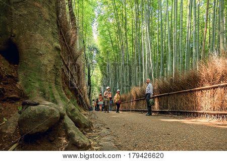 KYOTO JAPAN - APRIL 15 2015: Bamboo grove bamboo forest at Arashiyama Kyoto Japan