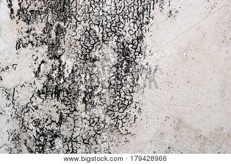 mold mycelium on damaged plaster dangerous chetomium