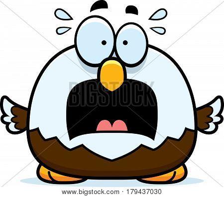 Scared Little Bald Eagle
