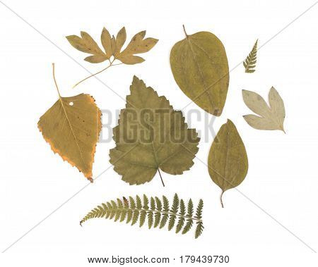 Pressed Dried Herbarium of Various Plants on White Background