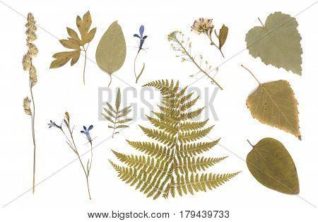Pressed Dried Herbarium Of Various Plants