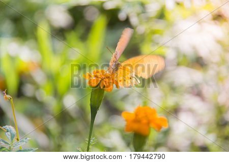 Soft focus Butterfly on the flower feeling move. Butterfly on the green leaf. Abstract beautiful light from sunshine.