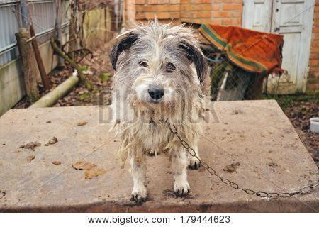 Portrait of an old watchdog standing on a doghouse close-up