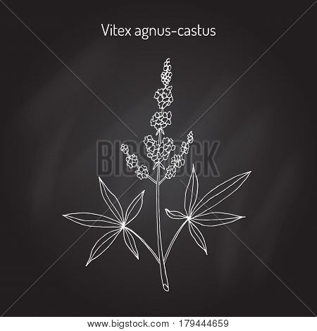 Vitex agnus-castus, or vitex, chaste tree, chasteberry, medicinal plant Vector illustration