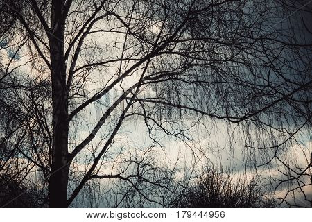 Black silhouette Tree branches against a cloudy rainy sky background