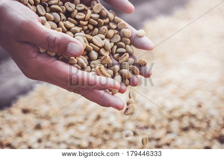 Background natural dried beans coffee bean.Coffee in hand. full frame