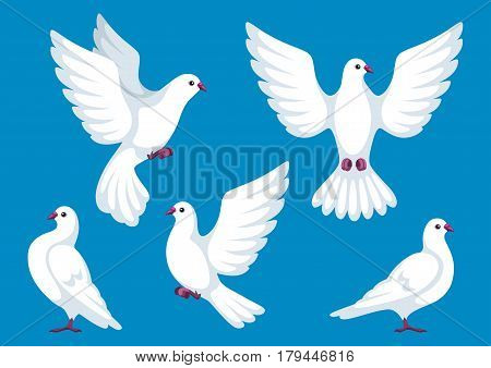 Set of five white doves. Beautiful pigeons faith and love symbol.