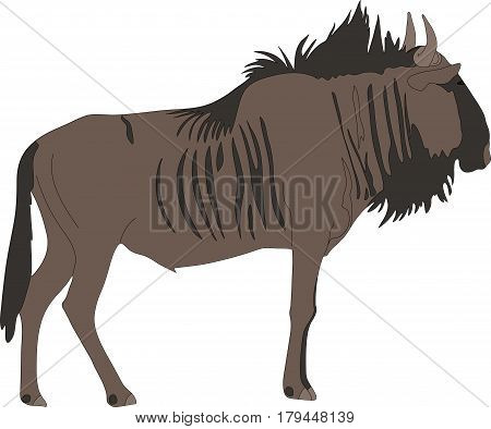 Portrait of a common wildebeest, standing, viewn from side, hand drawn vector illustration isolated on white background