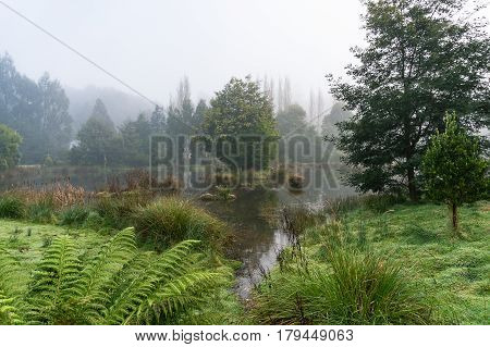 Lake, Swamp In Forest In Autumn